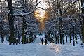 Humlegården December 2012 02.jpg