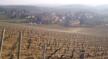 IMG Vignoble de Montagny.JPG