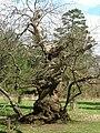 Ickworth Park -Suffolk, England-17April2006 (7).jpg
