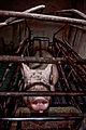 Igualdad Animal - Investigación Granjas Cerdos Toledo - Mayo 2010 1245 (6992286998).jpg