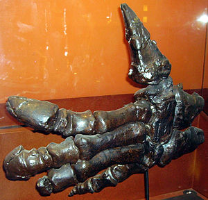 Ankylopollexia - Hand of Iguanodon, showing the distinctive thumb of the group.