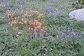 Impressionist meadow Pioneer Basin.jpg
