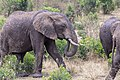 Impressions of Serengeti (135).jpg