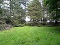 In Balblair Wood (3) - geograph.org.uk - 917086.jpg