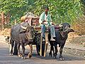 India-6327 - Flickr - archer10 (Dennis).jpg