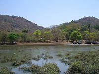 India-Elephanta-Trees.jpg