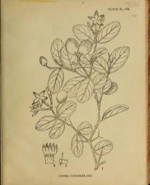 Indian Medicinal Plants (Plates Vol 4).djvu