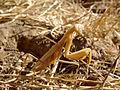 Insect in Black Diamond Mines Regional Preserve.jpg