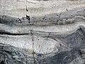 Interbedded metagraywacke-slate (Lake Vermilion Formation, Neoarchean, 2.695-2.722 Ga; Rt. 169 roadcut between Tower and Peyla, Minnesota, USA) 8 (21560115876).jpg