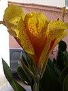 Iris flower 1.jpg