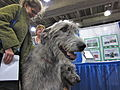 Irish wolfhound (8109965660).jpg