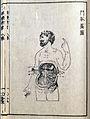 J.A. Kulmus, Tabulae anatomicae, Danzig; Wellcome L0022513EA.jpg