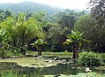 Jardim Botânico (Botanical Garden) (3454582059).jpg