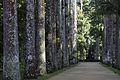 Jardim Botânico do Rio de Janeiro - 130715-1423-jikatu (9299745298).jpg