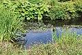 Jardin Botanique Royal Édimbourg 30.jpg