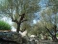 Jardins du Monde (Royan) - panoramio (6).jpg