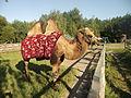 Jasnogorodka ostrich farm5.jpg
