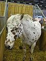 Jielbeaumadier cheval 2 scva paris 2012.jpeg
