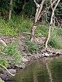 July 2016 Crooked Creek adventure - panoramio - Ron Shawley (52).jpg
