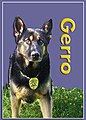 K-9 Hall of Fame - Flickr - The Central Intelligence Agency (10).jpg
