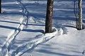 Kattajärvi Inari Suomi - Finland 2013-03 028 reindeer tracks.jpg