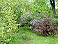Kharkiv botanical garden 2.JPG