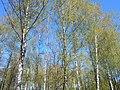 Khimselyshche, Cherkasy, Cherkas'ka oblast, Ukraine - panoramio (329).jpg