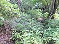 Kobe Municipal Arboretum in 2013-6-22 No,63.JPG
