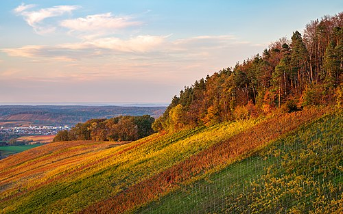 Löwenstein - Wolfertsberg - Weinberge und Waldrand im Oktober.jpg