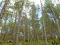 La Visite - panoramio (2).jpg