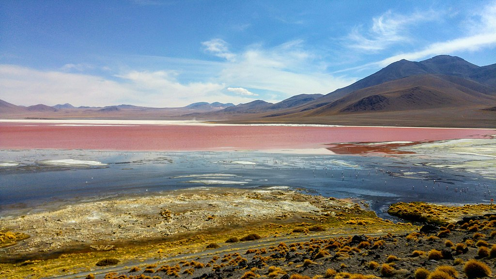 Laguna Colorada de Bolvia | Tu Gran Viaje