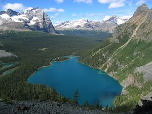 Lake O'Hara - Image: Lake O Hara from Yukness Ledge Alpine Route