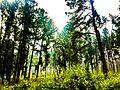 Lambasinghi Forest.jpg