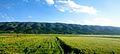 Landscape in route of Soon Sakesar Valley.jpg
