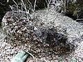 Landschaftsschutzgebiet Pferdebruch Eickholt Melle -Wurzeln- Datei 3.jpg