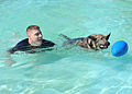 Law enforcement conducts K-9 water training 120918-F-TS228-128.jpg