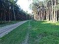 Leśna rowerostrada - panoramio.jpg
