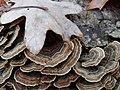 Leaf and fungus, so pretty.jpg