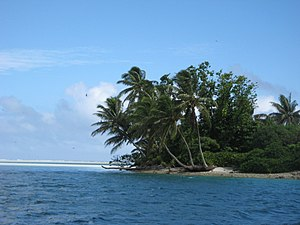Tarawa - A tropical islet with palm fronds oriented in the direction of the prevailing winds.