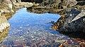 Little Brewster Island, Boston. - panoramio (18).jpg