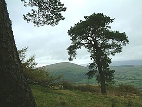 Little Mell Fell from Great Mell Fell.jpg