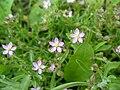 Littleflowers2.jpg