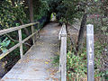 Los Altos Hills path.jpg