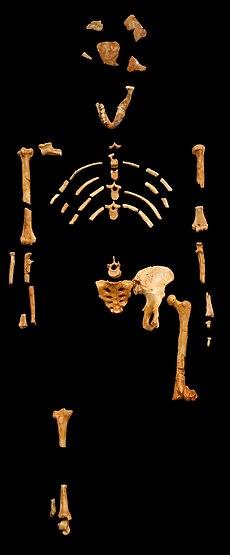 fosilni tipovi datiranja