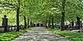 Luxembourg cimetière Notre-Dame platanes 02.jpg
