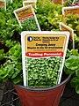 Lysimachia nummularia (Moneywort)- invasive plant sold in stores.jpg