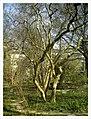 March Spring Botanischer Garten Freiburg - Master Botany Photography 2013 - panoramio (11).jpg