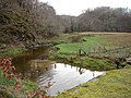 Marshland and stream by Coed-y-garth - geograph.org.uk - 1100251.jpg