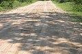 Marula road (393918979).jpg