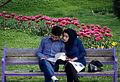 Mashhad Mellat Park (1).jpg